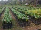 Vendo vivero agroforestal  el futuro