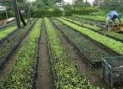 Venta de bello vivero agro forestales el pepo