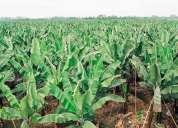 Vendo hacienda bananera, quevedo, los rios,contactarse!