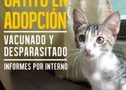 Excelente gatito en adopción