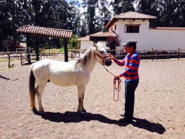 Excelente caballo pony de venta