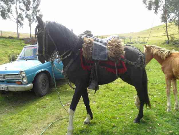 vendo caballo,Buen estado!