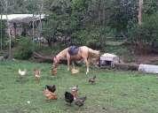 Vendo caballo.... yegua