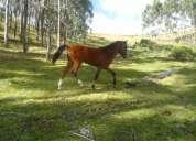 Vendo caballo potro