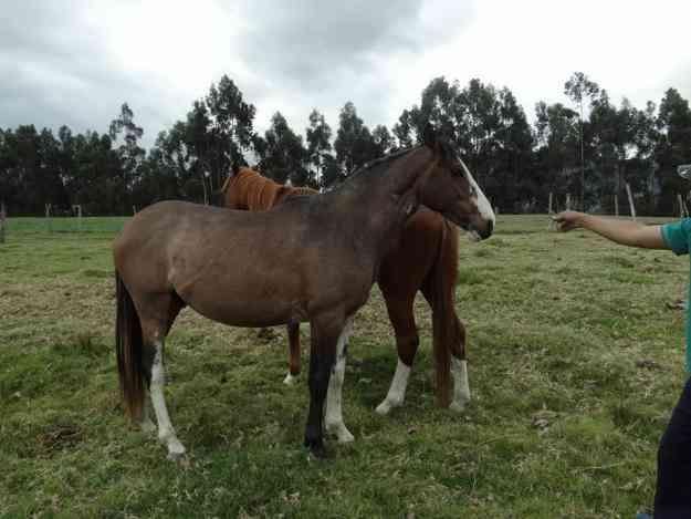 Lindo caballo de venta