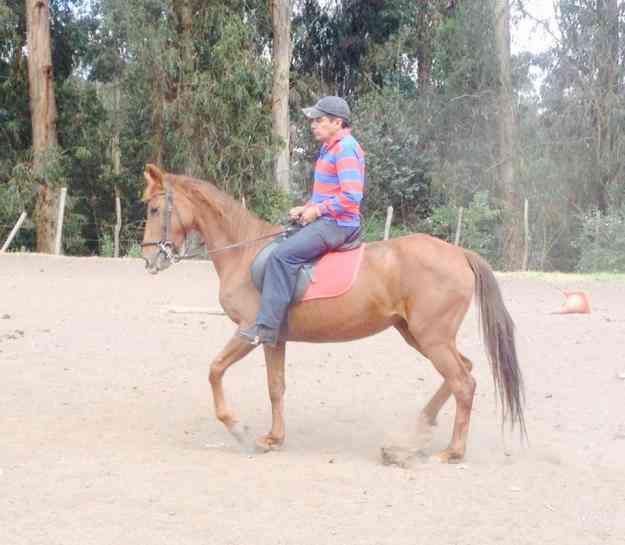 Excelente caballo de venta