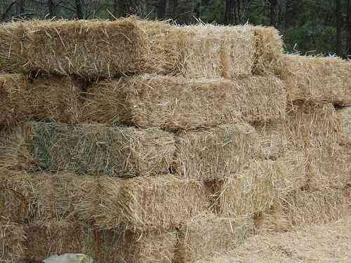 Para Vacas y Caballos Vendo pacas de heno, fardos de alfalfa