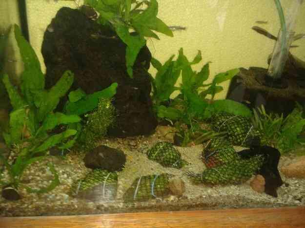Vendo Plantados paisajismo acuático