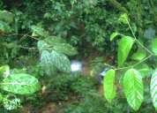 Finca 30 hectareas valle del manduriacu