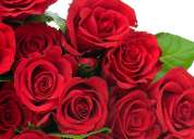 Rosas por bonches con calidad de exportación decoración