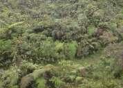 Vendo 2 hectareas en cosanga