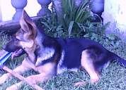 Cachorrita de cuatro meses