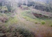 Ocasion finca hermosa de 23 hectáreas  con agua y luz