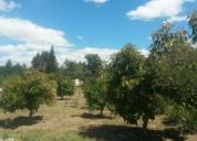 De oportunidad hermosos lotes en guayabamba con todos los servicios basicos a tan solo a 110m2 lista