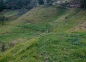 Vendo excelente propiedad de 6 hectáreas en tabacay