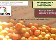 Venta de tomate rinon de invernadero