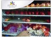 Liofilizacion de flores en ecuador,asesoria dr jorge rivera