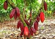 Vendo hermoso terreno plano con arboles frutales