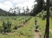Vendo terreno de 4 hectareas en san pablo