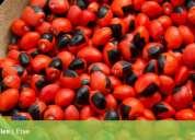 Artesanía del oriente ecuatoriano para mercado extranjero 593990044994