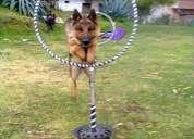 Entrena a tu perro,adiestramiento canino