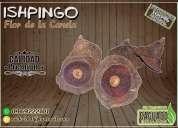Ishpingo / flor de la canela    calidad premium ®
