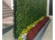 Servicio de jardineria, cortes, diseÑos
