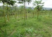 Vendo una finca agricola de 2,75 hectareas.