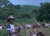 Dieciséis hectáreas