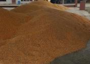 Venta maiz amarillo duro