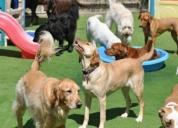 Oportunidad!. guardería, hotel y cuidado para su mascota