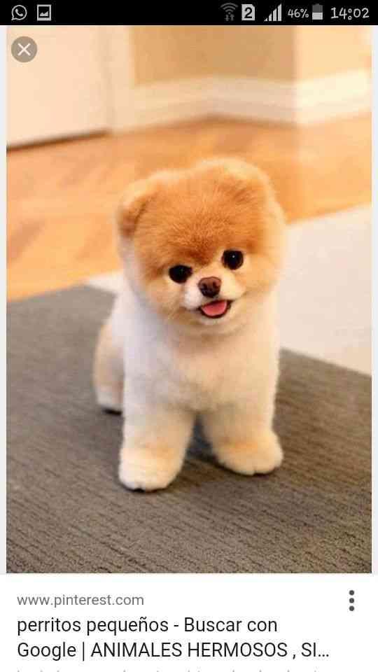 Compra de perro