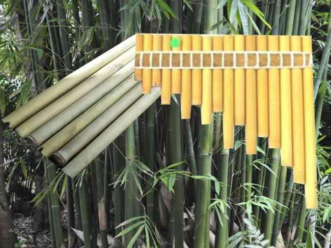 Bambú tunda para instrumentos musicales en Ecuador