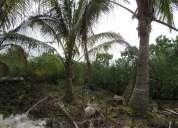 Terreno de venta en el sector tomas de berlanga isla santa cruz, galápagos, ecuador