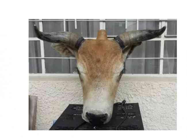 Cabeza Vaca Decoracion