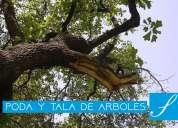 Poda y tala de árboles podridos, enredados en cables de alta tensión en guayaquil