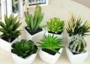 Necesitas plantas para tu hogar jardin u oficina?
