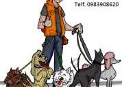 Servicio de paseos de perros.