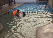 1-800 piscina!!! construiremos tu piscina soÑada en ecuador