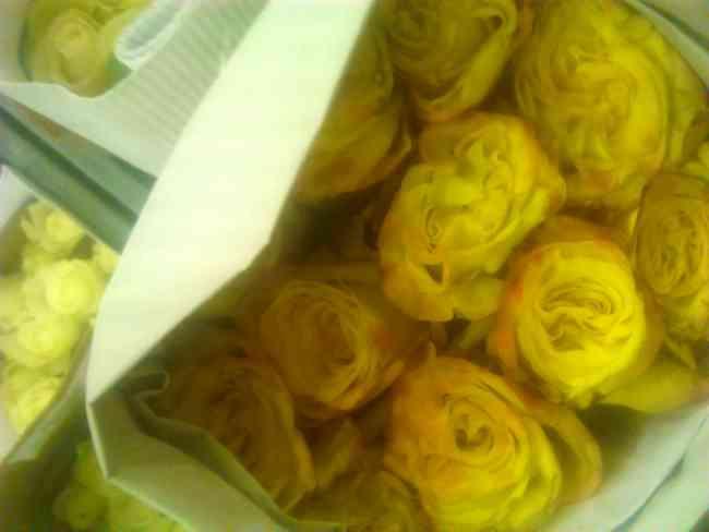 24 rosas por paquete, bonches por mayor y menor, colores variados distribuidora