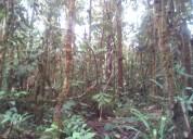 Terreno en venta ideal para proyectos turísticos en ecuador oriente