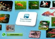 Venta de peces goldfish, guppys , espadas