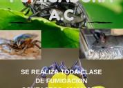 Fumigaciones control de plagas, ratas pulgas acaro chinches cucarachas
