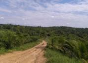 De oportunidad! vendo finca cultivada de palma africana en producción