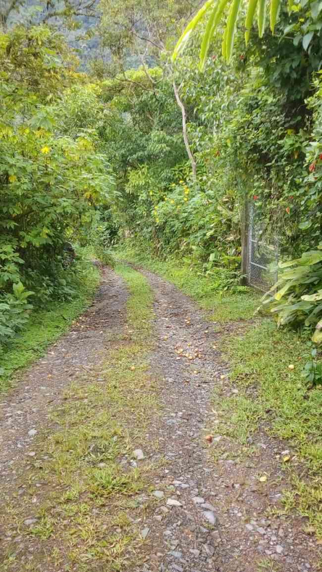 Vendo finca en Ecuador Manabí Pedernales ,