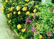 Servicio de jardinería guayaquil