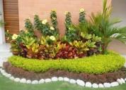 Servicios de jardineria diseÑo y mantenimiento de jardines / urbanizaciones - empresas - casas -etc