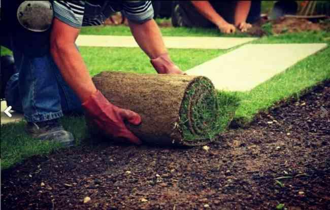 Cesped Natural Venta e Instalacion - Jardineria en General.