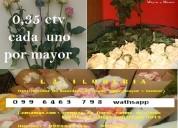 Paquetes de rosas de todo color distribuidores
