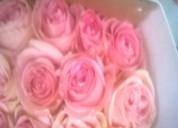Rosas de venta distribuidor  la floreria